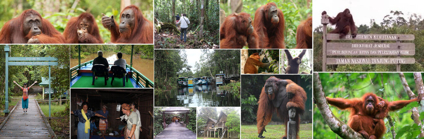 Tanjung Puting National Park - Central Kalimantan